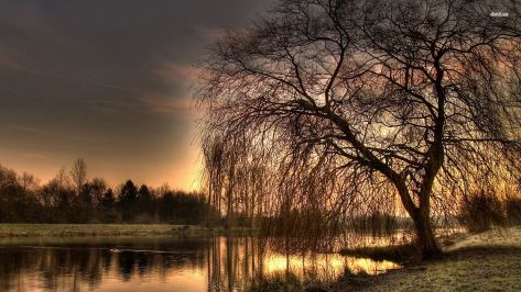 6723-willow-on-lakeside-1920x1080-nature-wallpaper