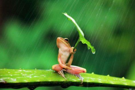 animal-frog-macro-nature-rain-umbrella-amazing-awesome-Favim_com-936986