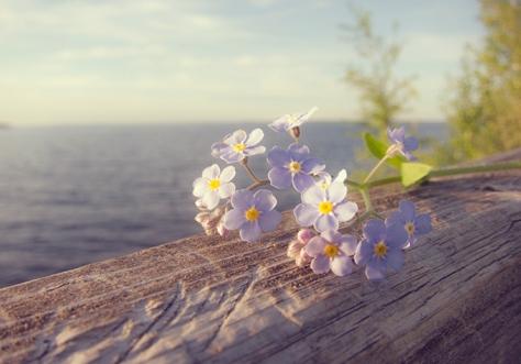 isla_Everywhere_lilac_flowers_3926_680