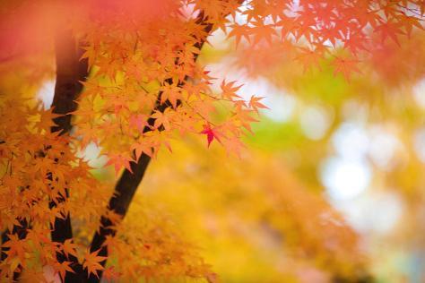 autumn-tree-branches-k-ko