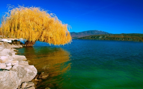 autumn%20season%20willow%202560x1600%20wallpaper_www_wallpaperhi_com_92