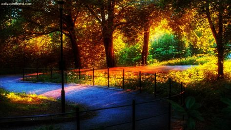 Amazing-Nature-Wallpaper-Rainbow-in-The-Park-1080p-Wallpapers